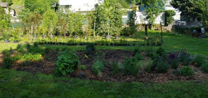 sviluppo giardino naturale 14