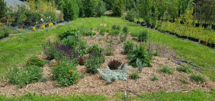 sviluppo giardino naturale 15