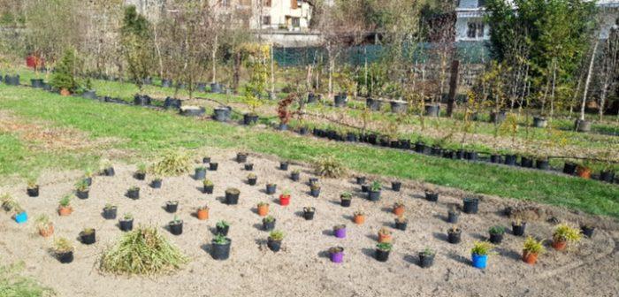 sviluppo giardino naturale 3