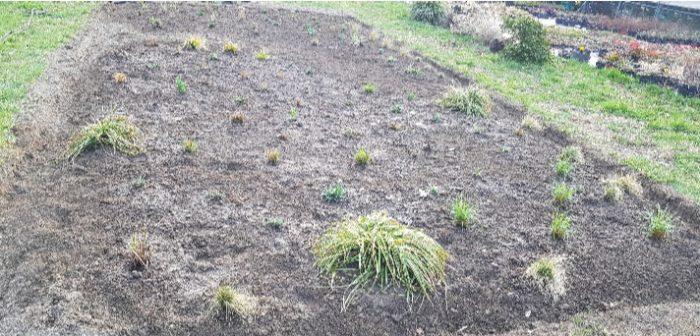 sviluppo giardino naturale 4