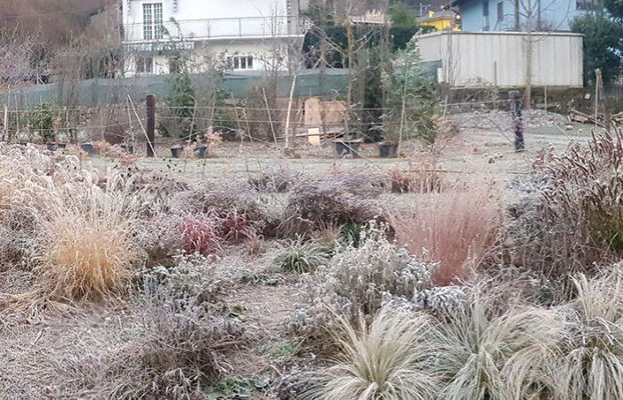 sviluppo di giardino informale (6)