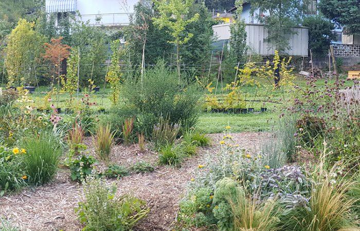 sviluppo di giardino informale agosto (1)