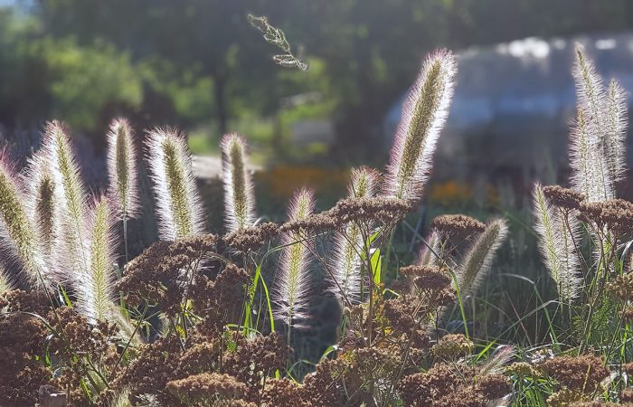 sviluppo di giardino informale agosto (3)