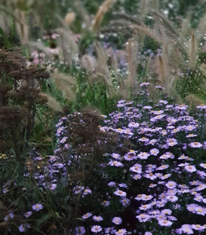 sviluppo di giardino informale settembre (1)