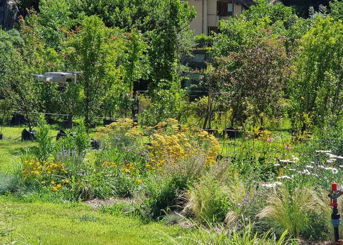 sviluppo giardino informale luglio (1)