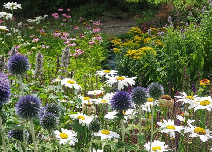 sviluppo giardino informale luglio (3)