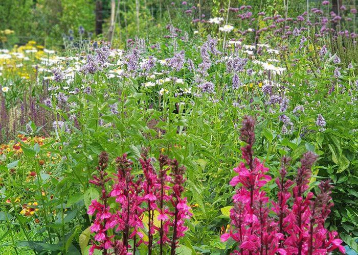 sviluppo giardino informale luglio (4)