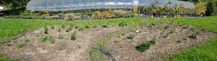 sviluppo giardino naturale 10