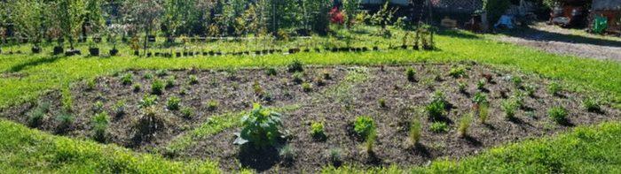 sviluppo giardino naturale 11