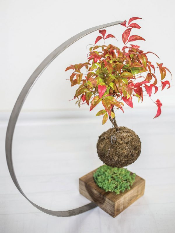 mossfera kokedama (3)
