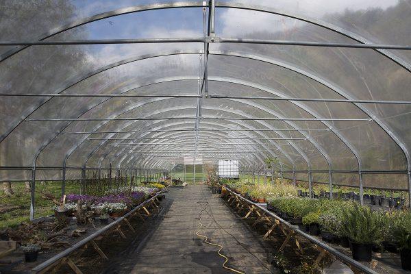 vivaio ossola giardini (1)