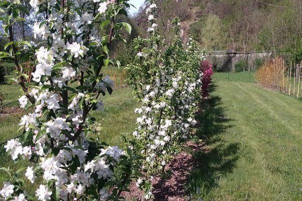 vivaio ossola giardini (10)
