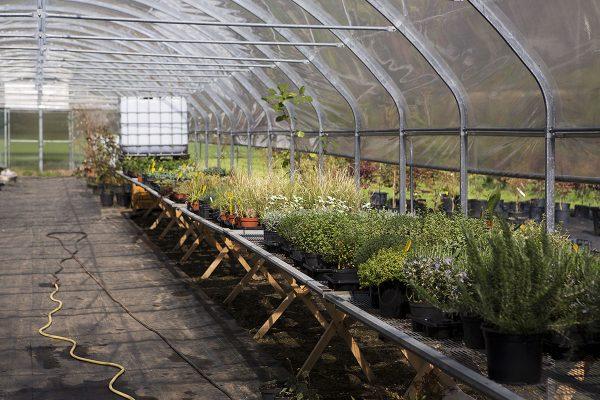 vivaio ossola giardini (2)
