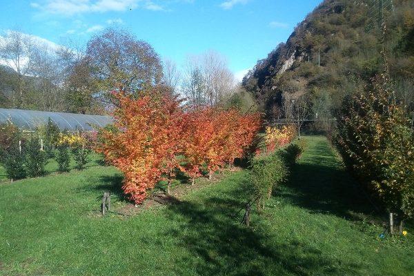 vivaio ossola giardini (3)