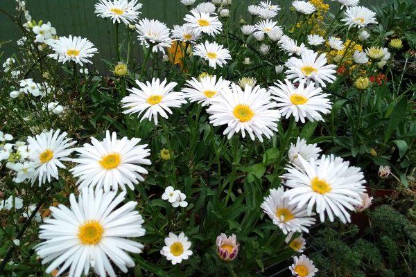 vivaio ossola giardini (5)