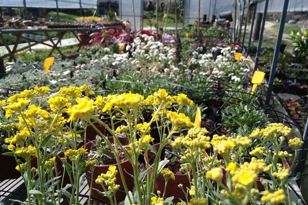 vivaio ossola giardini (7)