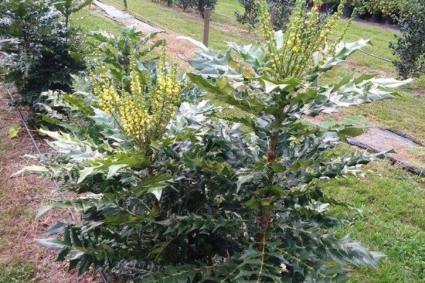 vivaio ossola giardini (8)